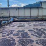 Jual Beli Bakteri Lumpur Aktif Aerob Anaerob Starter Pengurai Warna COD BOD TDS Ammonia Industri Textile Kertas Gula Tapioka Kelapa sawit